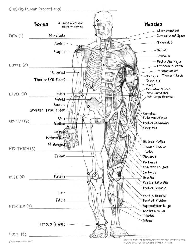 The Human Body Bones and Names